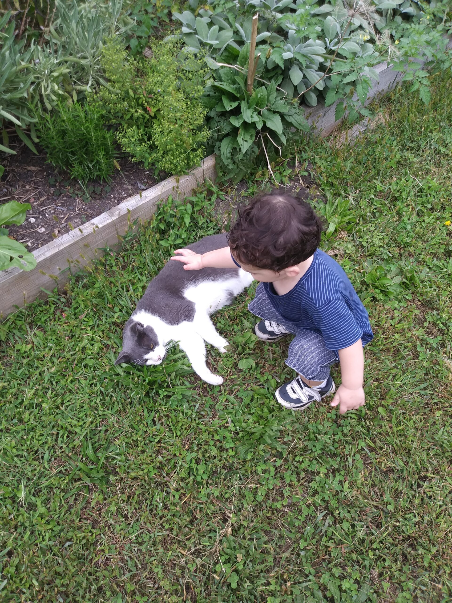 Toddler squatting to pet a gray and white cat lying on its side in the grass.