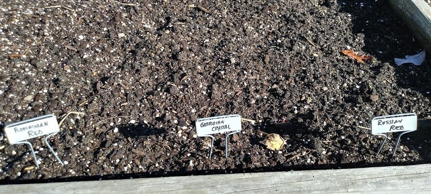 Plant identifiers in a bed of planted soil